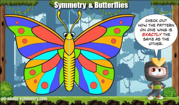 symmetry in butterflies