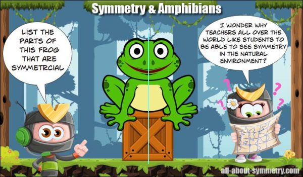 symmetry lesson amphibians