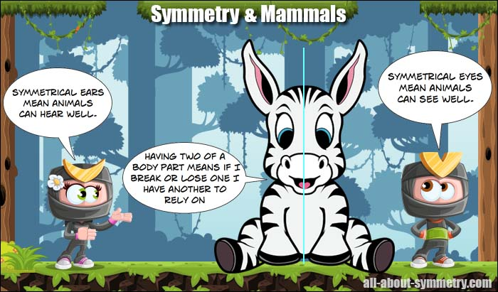 All About Symmetry - Mammals
